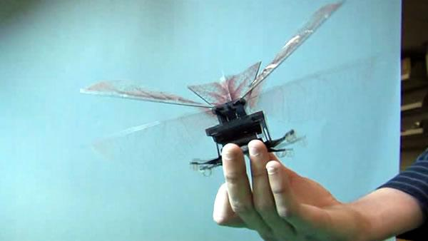 Mechanical flying cockroach unveiled at Cal lab