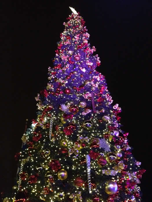 "<div class=""meta ""><span class=""caption-text "">Disneyland® friends sang, danced and lit Pier 39's majestic 60-foot tree on Sunday, November 18th, 2012.  Topped with ornaments, bows and twinkling lights, it's a festive sight to see! (KGO)</span></div>"