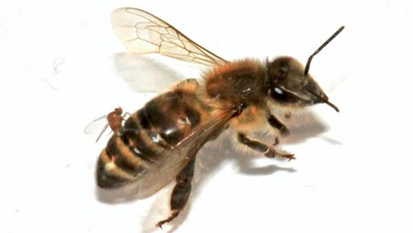 Passing observation leads to surprising bee discovery