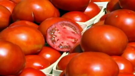 Eating more tomatoes can prevent strokes in males