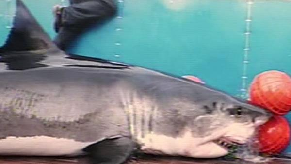 Scientist questioned over treatment of sharks