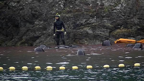 I-Team investigates Japanese whale and dolphin slaughter