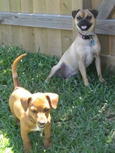 "<div class=""meta ""><span class=""caption-text "">Ruby and Dixie (Photo submitted by Katherine W. via Facebook)</span></div>"