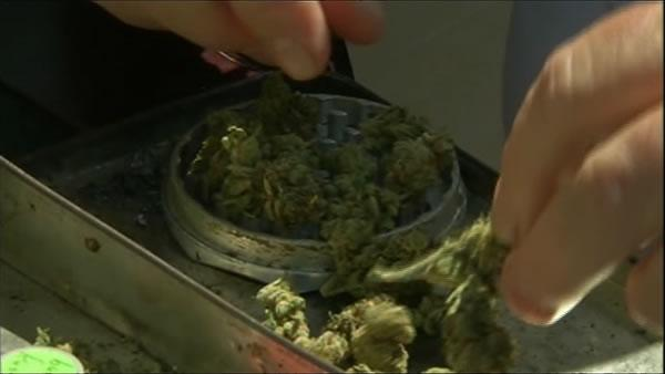 Marijuana is seen in a container at the Cannabis and Hemp Expo in Oakland, Calif. Saturday, September 3, 2011.