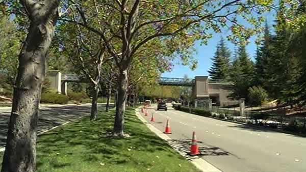 San Ramon residents meeting over Sycamore trees
