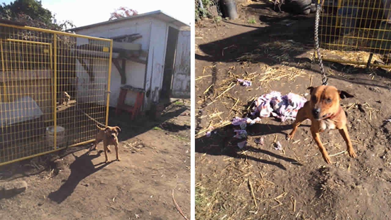 Oakland dog-fighting operation