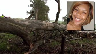 The old tree had stood for years before it fell at the exact moment 22-year-old Kenneisha Hawkins-Dale was driving by.