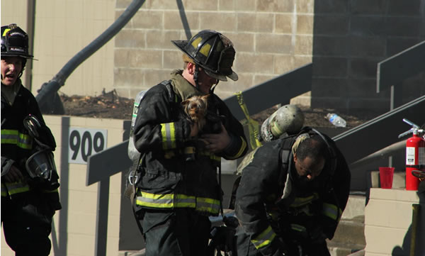 A firefighter rescues a puppy from a burning...