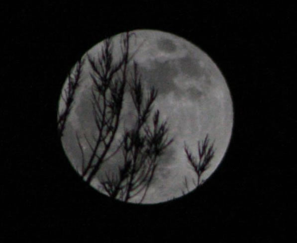 "<div class=""meta ""><span class=""caption-text "">Many viewers all around the Bay Area sent in their photos of Saturday night's supermoon.  (Photo submitted by Jeff B. via uReport)</span></div>"