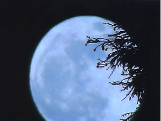 Many viewers all around the Bay Area sent in their photos of Saturday night's supermoon. (Photo submitted by Paulskids2005 via uReport)