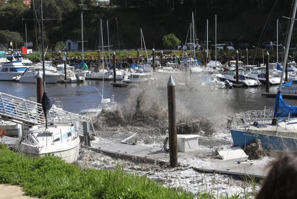 These photos were taken on Friday morning around 11:15 at the Upper Harbor in Santa Cruz.  (Photo submitted by Linda Azevedo via uReport)