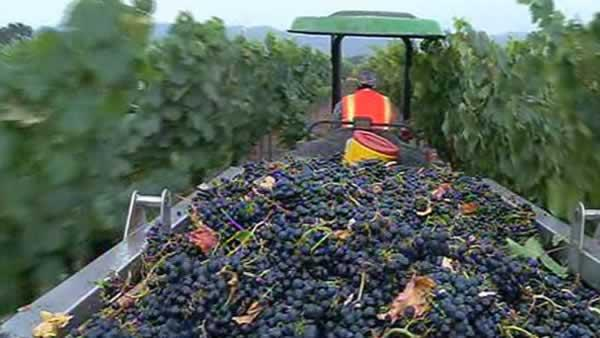 Early wet weather has Napa Valley vintners worried