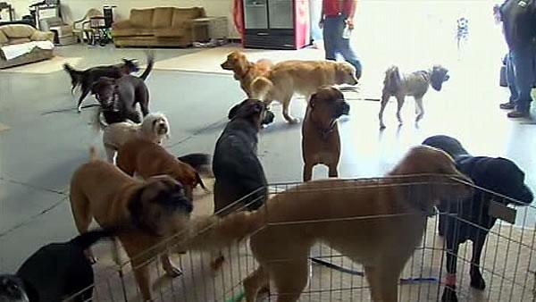 Sonoma Co. woman revolutionizing dog shelter system