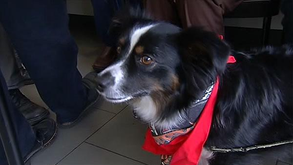 Dog survives 'death caps' thanks to new procedure