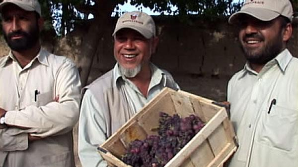 'Roots of Peace' spreading through Afghanistan