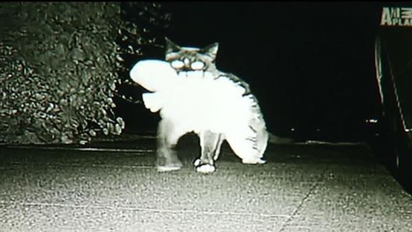 Klepto feline gives new meaning to 'cat' burglar