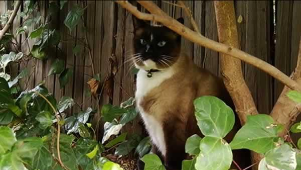 'Klepto cat' becomes household name worldwide