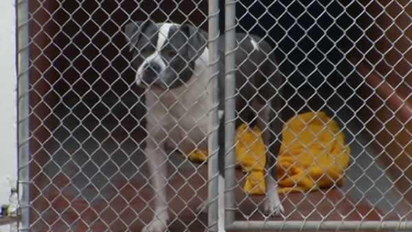 Man wins battle to save pit bull from death row