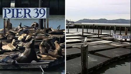 Pier 39, sea lions, San Francisco