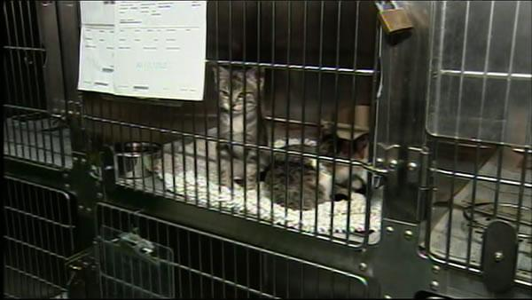 SF Animal Welfare Commission proposes ban on pet sales