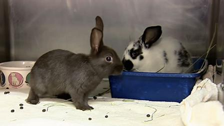 San Francisco has nearly two dozen bunnies in need of a home.