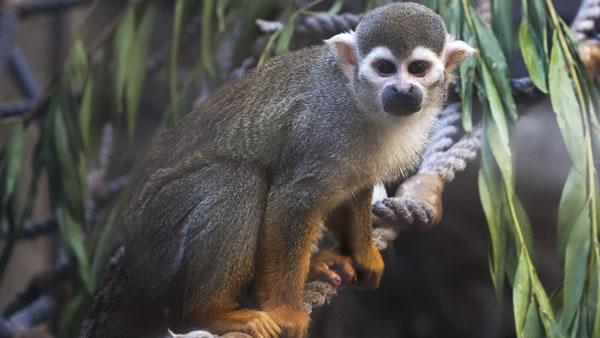 Squirrel monkey stolen from SF Zoo overnight