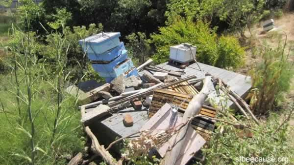 Bernal Heights beehives smashed