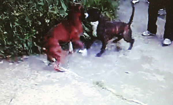 "<div class=""meta image-caption""><div class=""origin-logo origin-image ""><span></span></div><span class=""caption-text"">San Francisco police have busted an alleged dog fighting ring in the city.  The SFPD is working to identify additional individuals involved in the case.  If anyone has any information regarding the location of the dogs or the identity of the suspects shown in these photos, please contact the SFPD tip line at 415-575-4444. (SFPD)</span></div>"