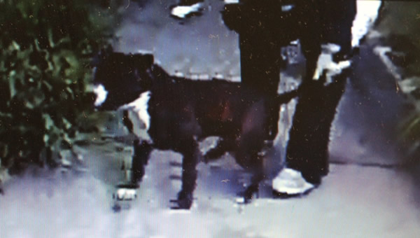 San Francisco police have busted an alleged dog fighting ring in the city.  The SFPD is working to identify additional individuals involved in the case.  If anyone has any information regarding the location of the dogs or the identity of the suspects shown in these photos, please contact the SFPD tip line at 415-575-4444. <span class=meta>(SFPD)</span>