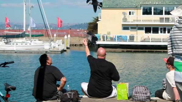 "<div class=""meta ""><span class=""caption-text "">The Bay Area is enjoying a host of events the first week of October including America's Cup races, festivals, fairs and of course the famed Blue Angels! (Photo submitted via uReport) (KGO)</span></div>"