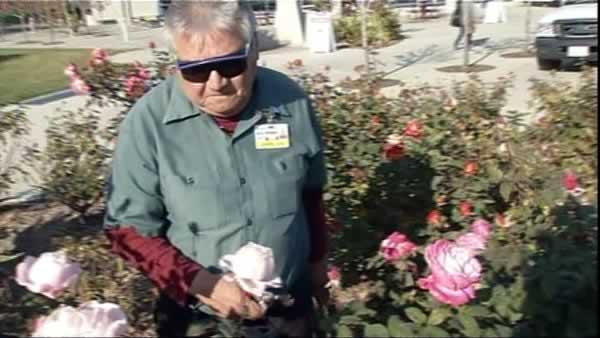 'Rose Man' retires without taking a sick day
