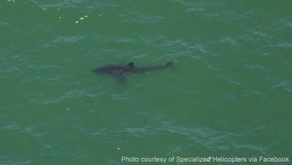 Great white shark spotted off Aptos beaches