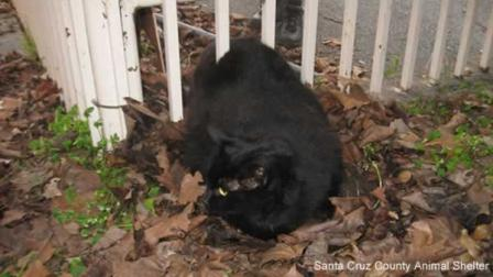A cat cashed in on one of its nine lives in after it found itself wedged between two fence posts in Santa Cruz on Monday.
