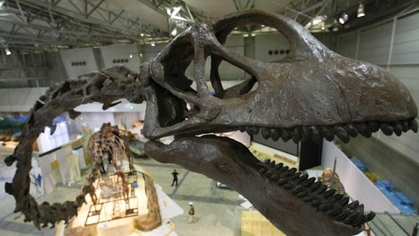 Worlds largest dinosaur skeleton, Tokyo, Japan, Giant Mamenchisaurus