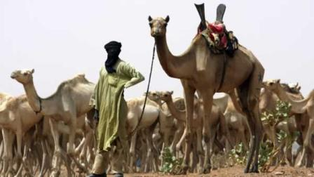 With almost no resistance, al-Qaida in the Islamic Maghreb, or AQIM, is implanting itself in Africas soft tissue, choosing as its host Mali, one of the poorest nations on earth.  (AP Photo/Alfred de Montesquiou, File)