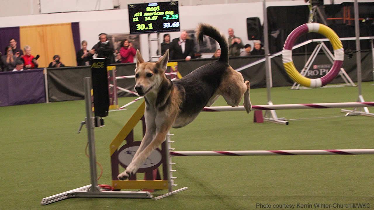 Mutt Wins Dog Show