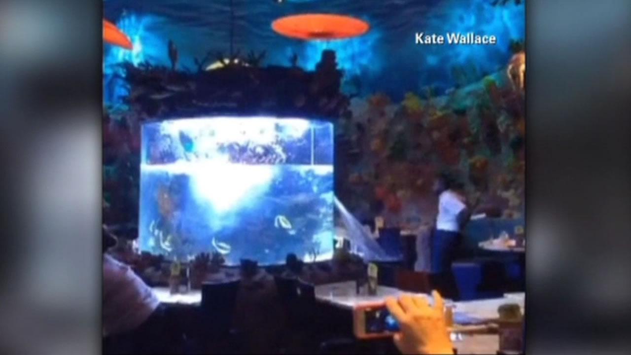 Large fish tank ruptures at florida 39 s t rex cafe for Disney fish tank
