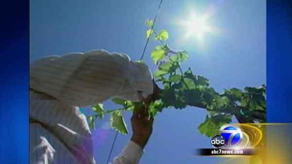 Cal OSHA considers new heat laws
