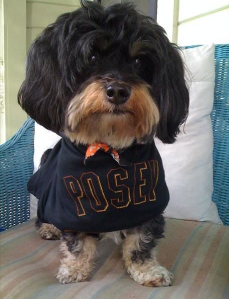 Dog, Posey, getting ready for tomorrow&#39;s home opener! <span class=meta>(submitted via uReport)</span>