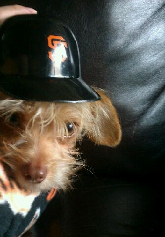 Buster Edgar Knutson gearing up for today's game - Giants Fan (Sent via uReport)