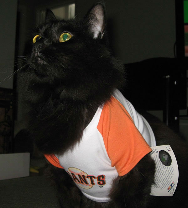 "<div class=""meta ""><span class=""caption-text "">2012 postseason baseball fever hits the Bay Area! Fans (and some of their pets) are going all out to support their favorite teams! (Photo submitted via uReport)</span></div>"