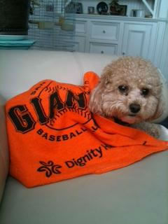 "<div class=""meta image-caption""><div class=""origin-logo origin-image ""><span></span></div><span class=""caption-text"">2012 postseason baseball fever hits the Bay Area! Fans (and some of their pets) are going all out to support their favorite teams! (Photo submitted via uReport)</span></div>"