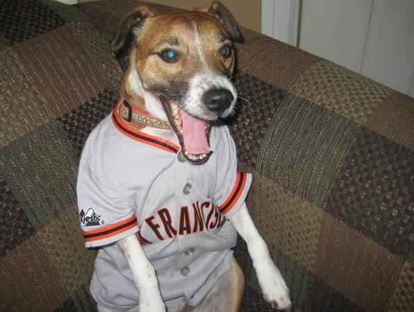 Indie from Menlo Park is a big Giants fan! Sent in by Carrie (Photo submitted by Erika via uReport)