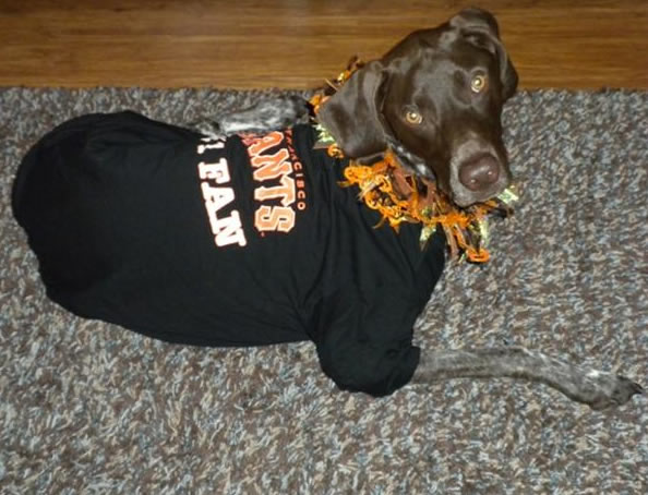 Born in Texas but a die-hard San Francisco Giants fan!  (Photo submitted by Erika via uReport)