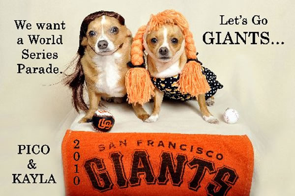 Here are a few photos I took of my Chihuahuas' Kayla and Pico showing how much we love the Giants. I also keep posting them on my Facebook page: Lilli Ann Militar-Funkhouser (Photo submitted by via uReport)