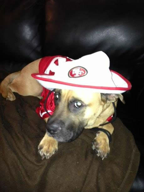 There is no shortage of 49er pride here in the Bay Area! Keep sending your photos to uReport@kgo-tv.com and we may show them off on air! <span class=meta>(KGO Photo&#47; photo submitted via uReport)</span>