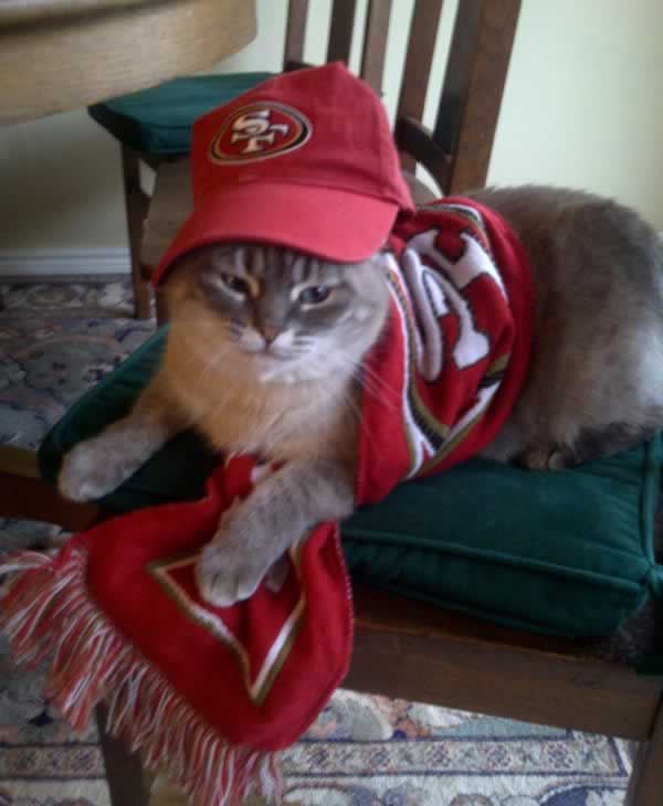 <span class=meta>(Image submitted via uReport. Crystal the Rally Cat decided to don her gear to ensure a Niners win last Sunday.  It worked!!)</span>