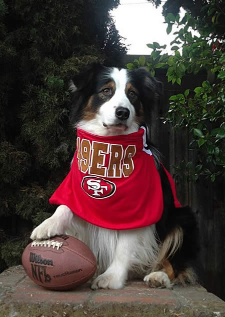 Thanks for showing off your Niner pride! Keep emailing your photos to uReport@kgo-tv.com and we might share them on TV! <span class=meta>(Photos submitted via Facebook by Blaze Silva)</span>