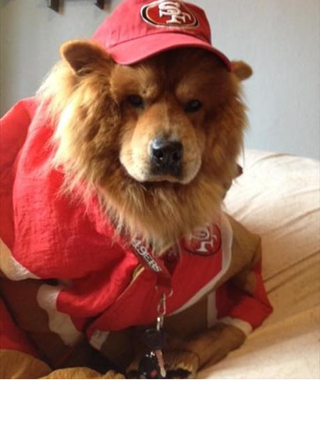 49ers #1 Fan, Zeke. &#40;Photo submitted via uReport&#41; <span class=meta>(KGO)</span>