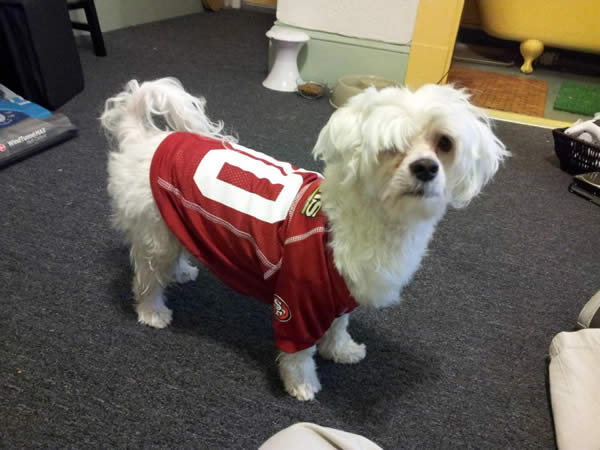 Austin loves the 49ers!  He will be sporting his Christmas gift this Saturday for the Packers vs. 49ers playoff game.  &#40;Photo submitted by Daryl D. via Facebook&#41; <span class=meta>(KGO)</span>